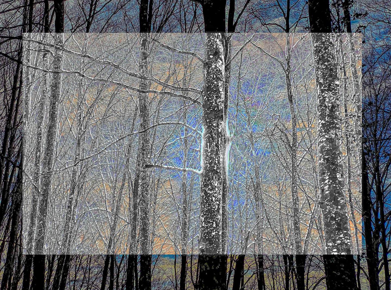 Blaise Lavenex - LA DERNIERE NEIGE FORESTIERE